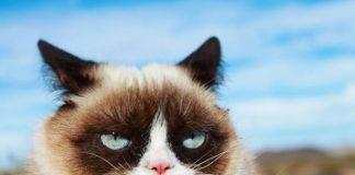 Grumpy Cat; Foto instagram @realgrumpycat