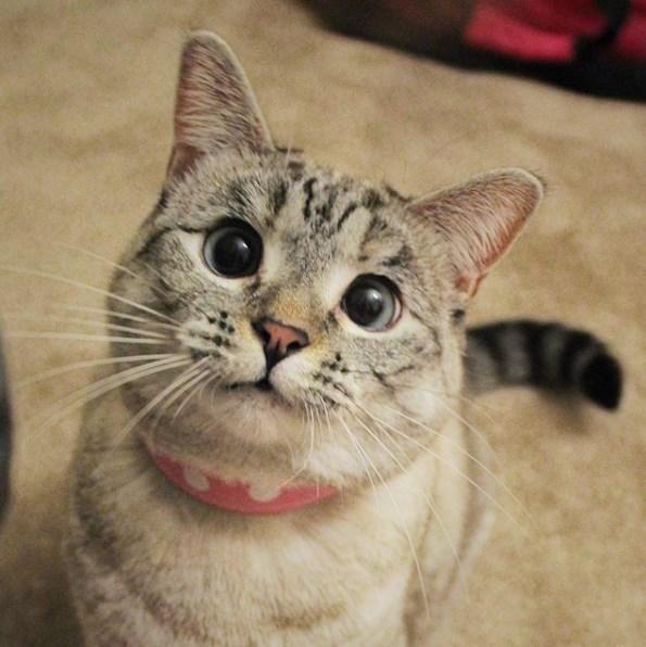 Najpopularnija mačka na instagramu, Nala; Foto instagram @nala_cat