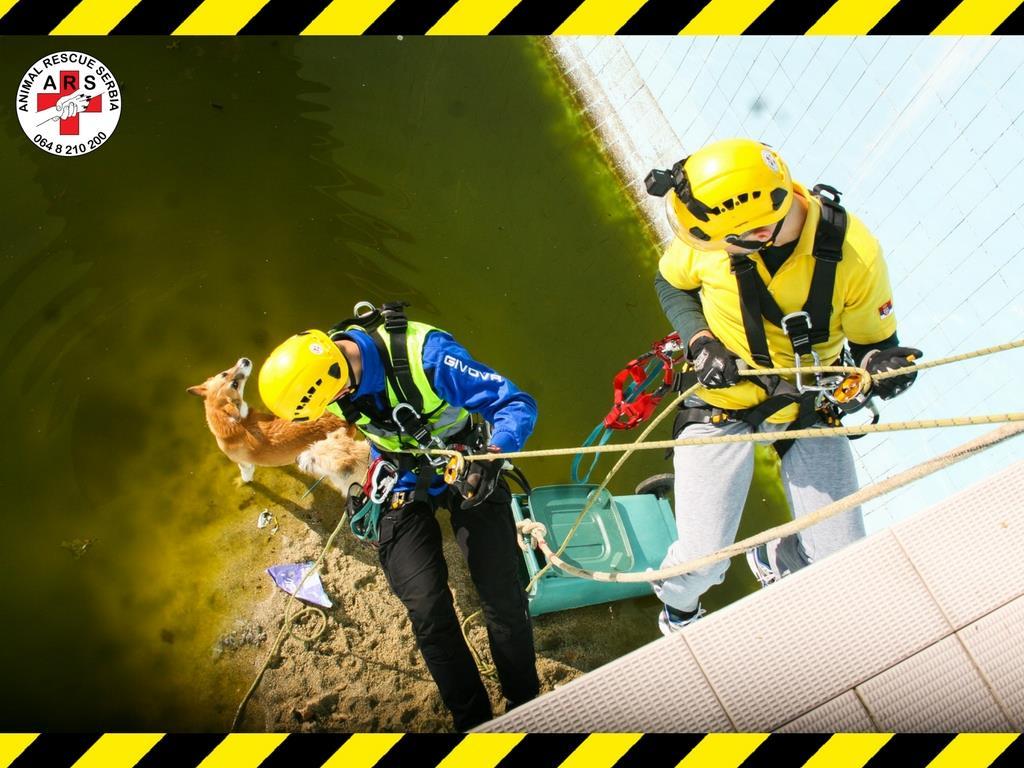Spašavanje pasa iz bazena; Foto: facebook.com Animal Rescue Serbia