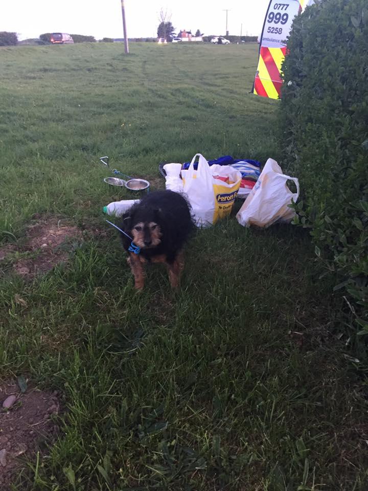 Tessa, Vezali su je i ostavili; Foto: facebook.com South Yorkshire Pet Ambulance