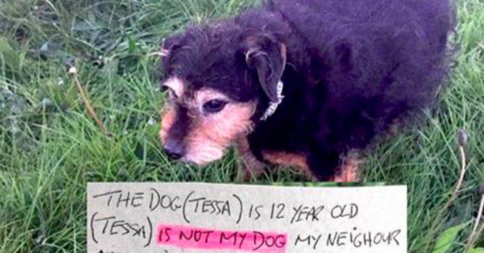 Vezali su je i ostavili uz potresnu poruku; Foto: twentytwowords.com