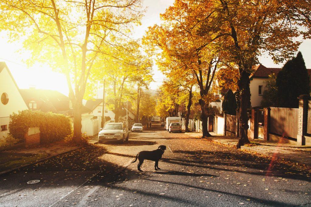 Pas na ulici; Foto Daniel Frank pexels.com