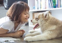 Da li psi pamte ljude iz prošlosti? Foto: pexels.com