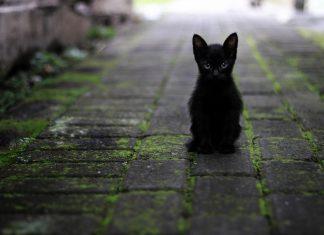 Svetski dan prihvatanja crnih mačaka; Foto: pixabay.com