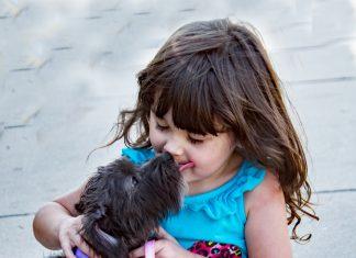Zašto nas psi ližu; Foto pexels.com