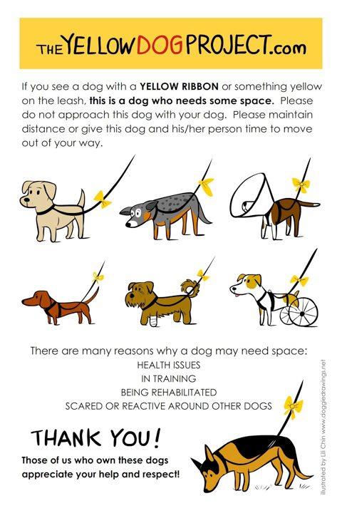 Šta da radite kada vidite psa sa žutom trakom; Foto theyellowdogproject.com