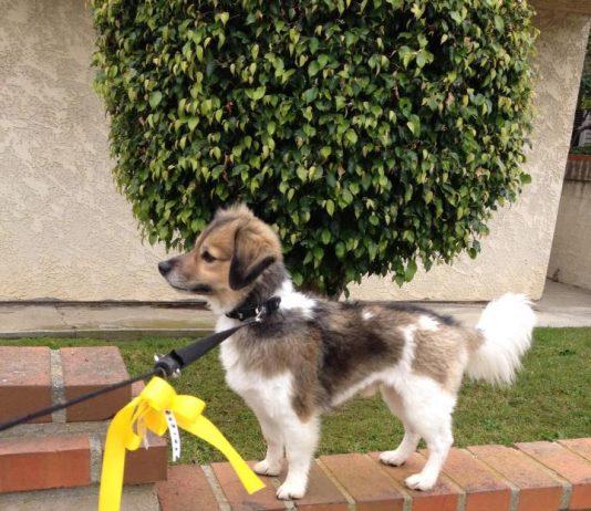 Šta znači kada pas ima žutu traku na povodcu; Foto privatna arhiva