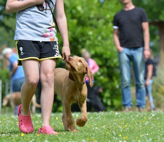 Deca i psi - Kako naučiti dete da prošeta psa; Foto Katrin B. pixabay.com