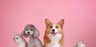 Kina zabranila ishranu psećim i mačijim mesom; Foto pixabay.com