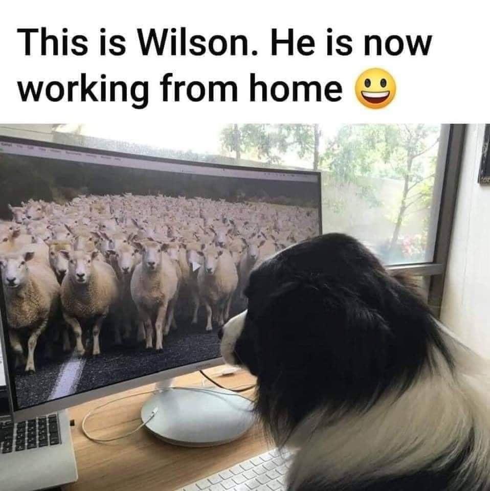 Wilson radi od kuće